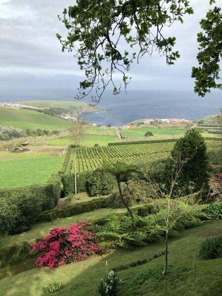 plantação chá verde dos açores biológico juice at home